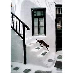 Chat grec / Greek Cat / Griechische Katz...