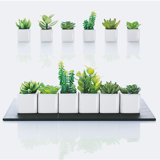 plantes artificielles asa