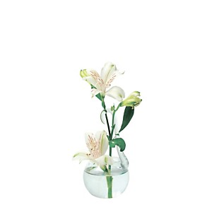 Vase à suspendre en verre transparent MO