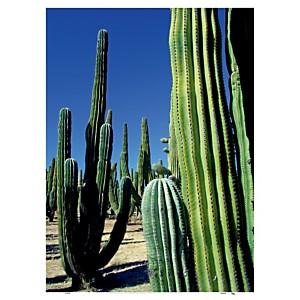 Mexique (Miller Hopkins)