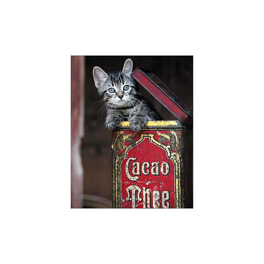 Petit chat en boite, Jean-Louis KLEIN, Marie-Luce HUBERT, affiche 24x30 cm