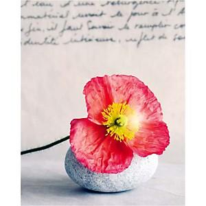 Pavot endormi, Amélie VUILLON, affiche 40x50 cm