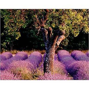 Provence, Bryan F. PETERSON, affiche 24x30 cm