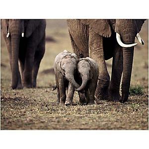 Eléphanteaux, Kenya, Anup SHAH, affiche 30x40 cm