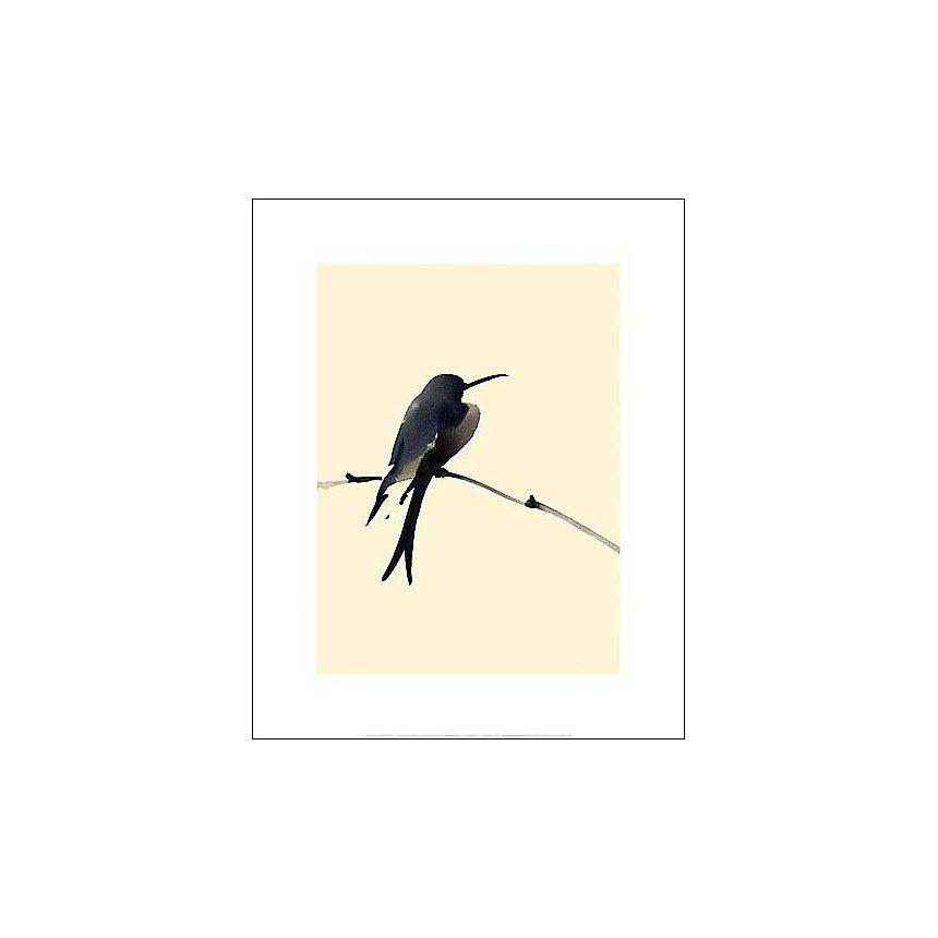 Petit oiseau, Aurore DE LA MORINERIE, affiche 40x50 cm