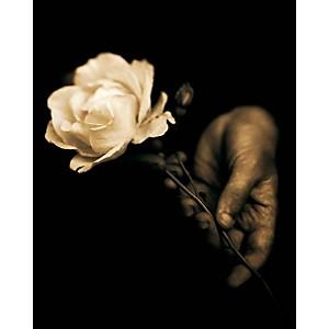 L'odora, Tessa TRAEGER, affiche 40x50 cm