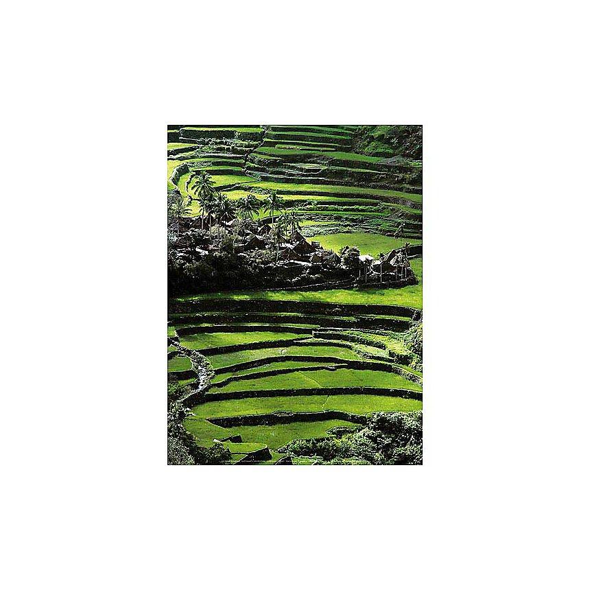 Rizière en terrasse, Thaïlande, SUPERSTOCK, affiche 30x40 cm