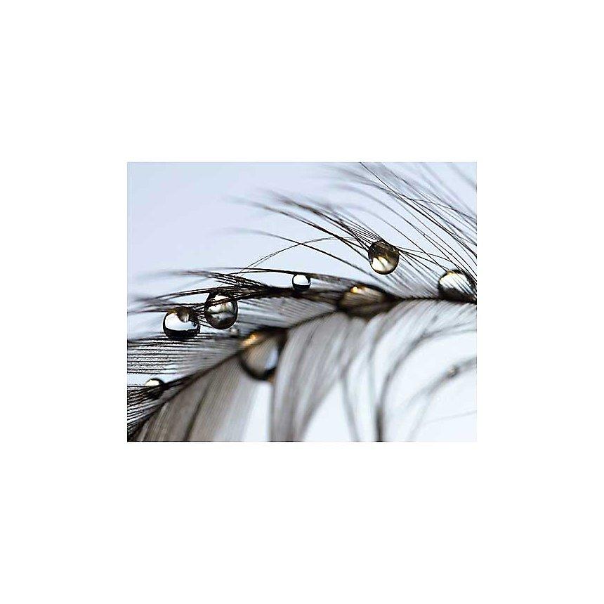 Eclat volatile, Mikio WATANABE, affiche 40x50 cm