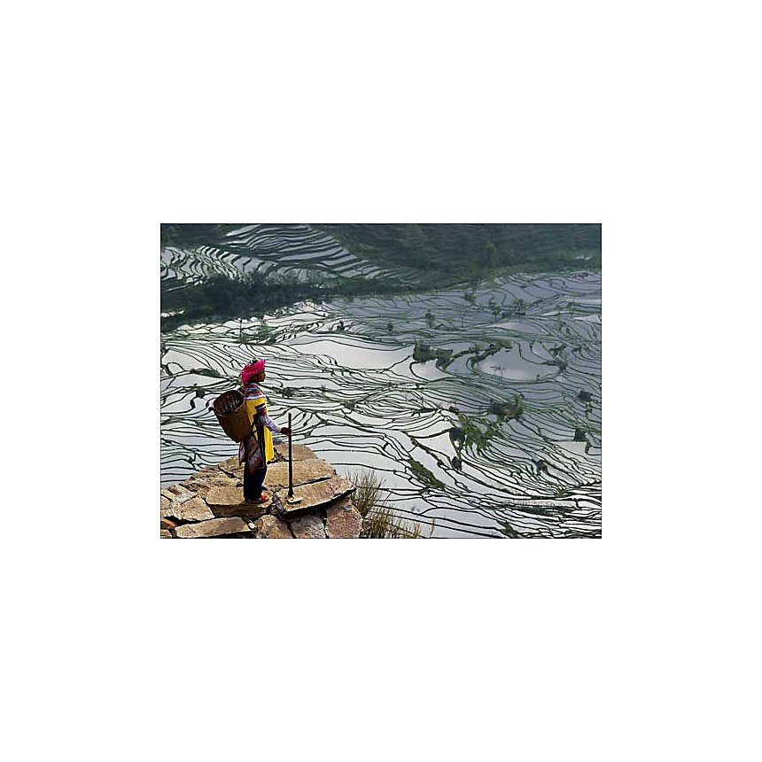 Chine, Province du Yunnan, rizières en eau, femme de l'ethnie Yi, Bruno MORANDI, affiche 50x70 cm