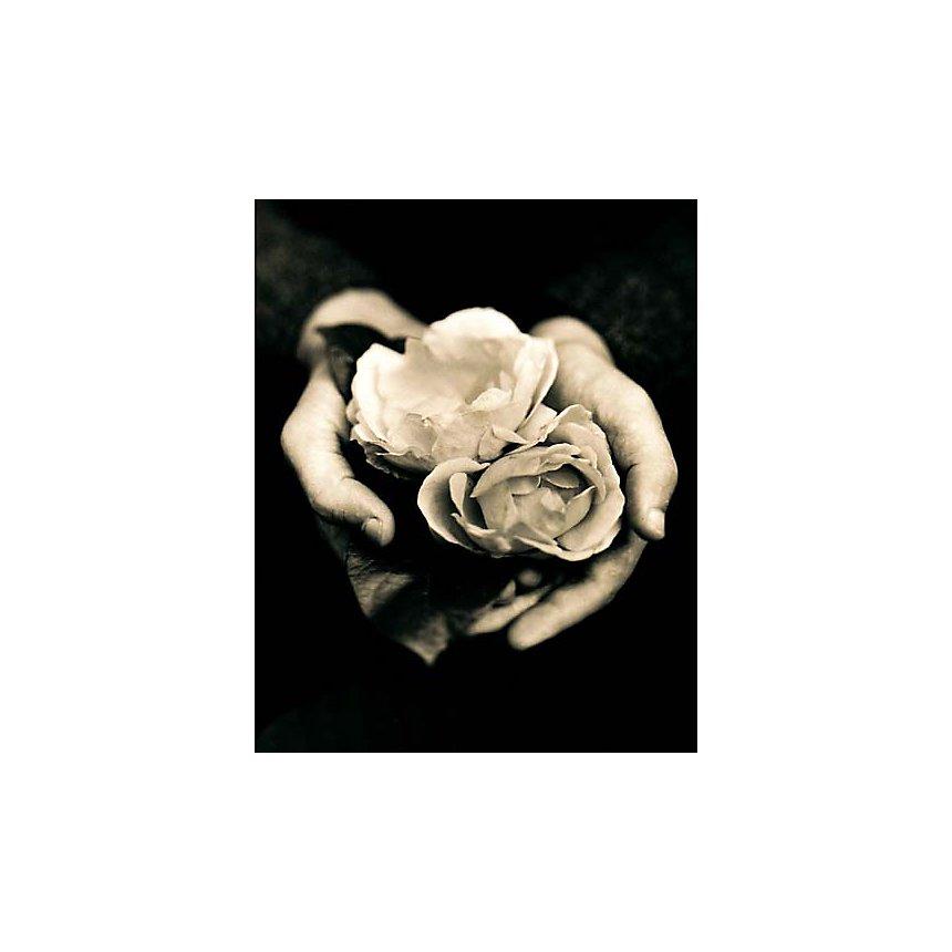 Deux roses, Tessa TRAEGER, affiche 40x50 cm