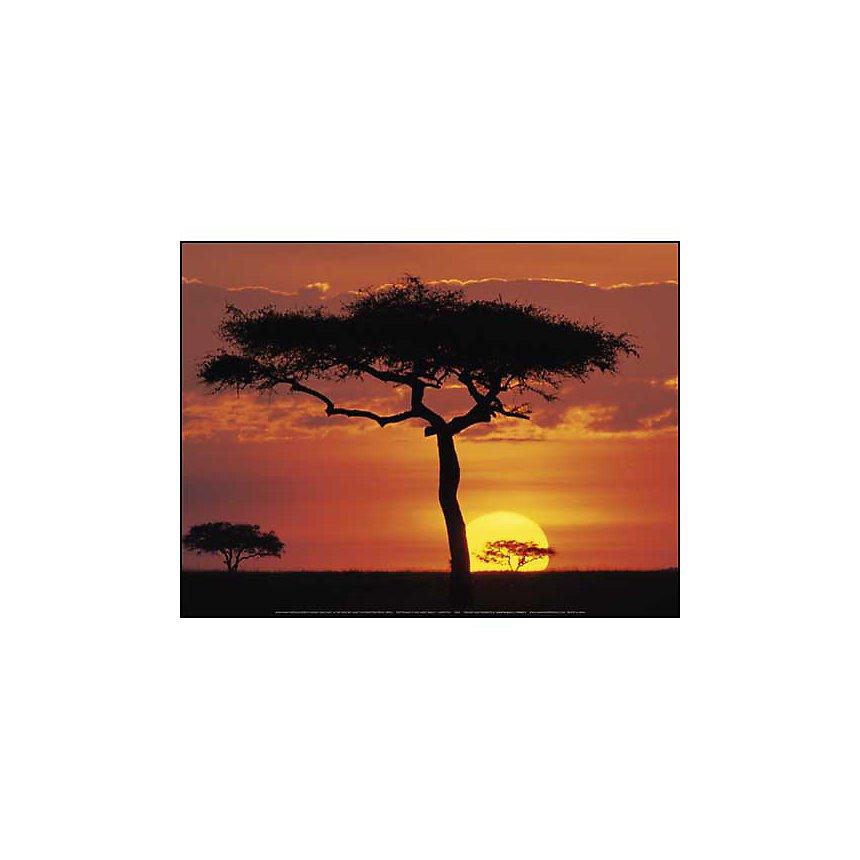 Réserve nationale du Masai Mara, Kenya, James URBACH, affiche 30x40 cm