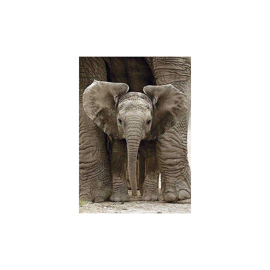 Eléphanteau, Andy ROUSE, affiche 50x70 cm