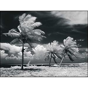 Palmiers dans la tempête, Floride, H. ARMSTRONG ROBERTS, affiche 30x40 cm