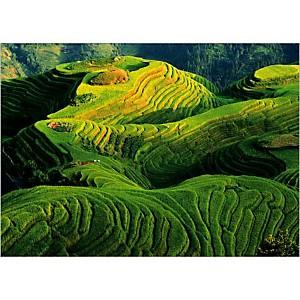 Rizières en terrasse, Chine, Keren SU, affiche 50x70 cm