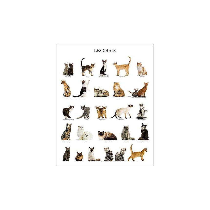 Les chats, Jean-Michel LABAT, affiche 40x50 cm