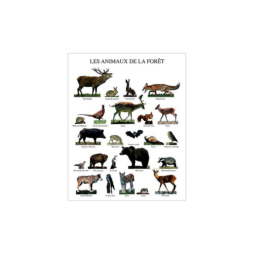 Les animaux de la forêt, Atelier Nouvelles Images, affiche 40x50 cm