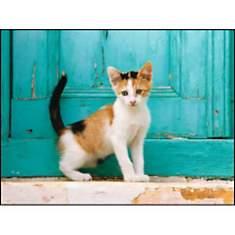 Chaton devant une porte vert pâle, Jean-...