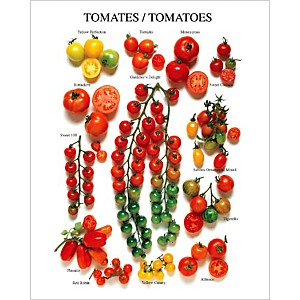 Les tomates (variétés américaines), Roger PHILLIPS, affiche 40x50 cm