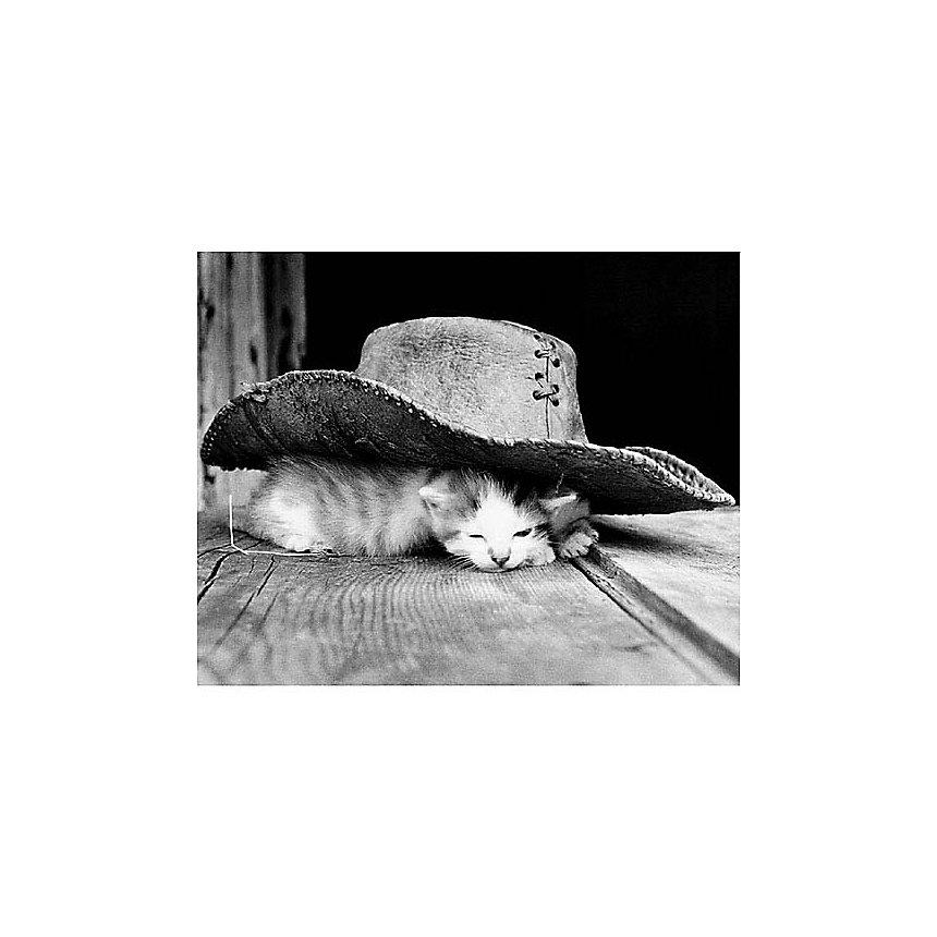 La sieste, Philippe PACHE, affiche 24x30 cm