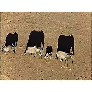 Eléphants dans le Damaraland, Namibie, Michael POLIZA, affiche 30x40 cm