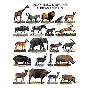 Animaux d'Afrique, Atelier Nouvelles Images, affiche 40x50 cm