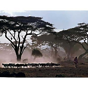 Amboseli, Kenya, Daniel MOTTISON, affiche 30x40 cm