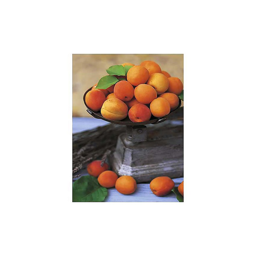 Les abricots, Dominique ZINTZMEYER, affiche 30x40 cm