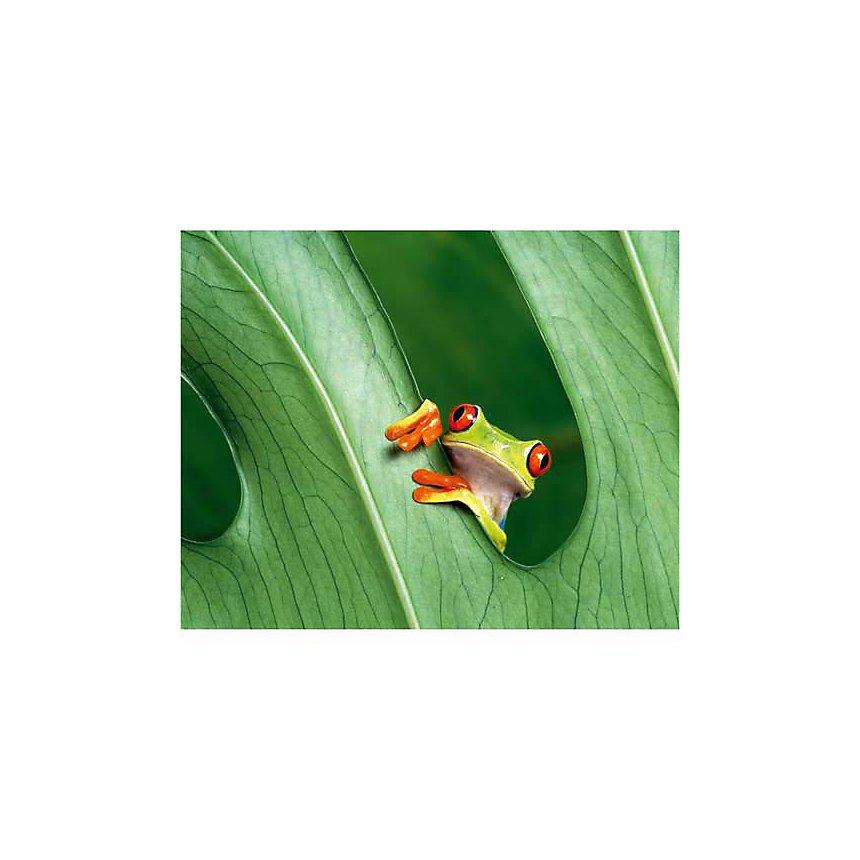 Rainette aux yeux rouges, Costa Rica, Amérique centrale, Jean-Louis KLEIN, Marie-Luce HUBERT, affiche 24x30 cm