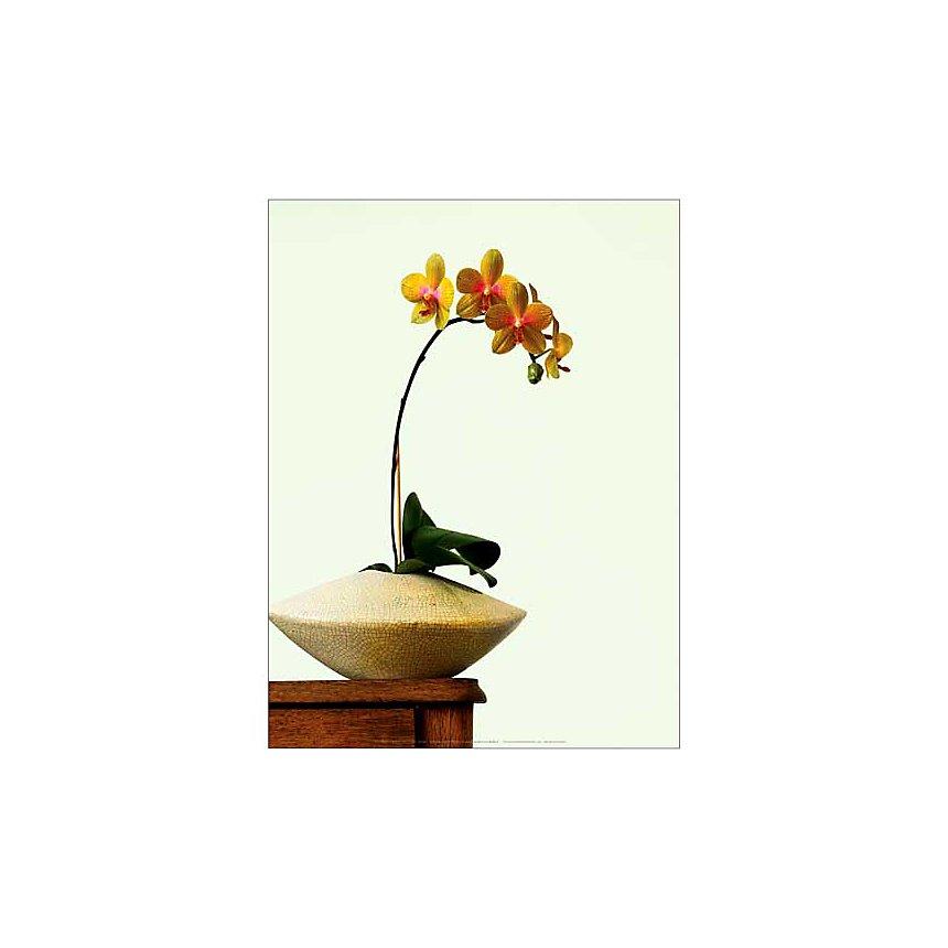 Orchidée jaune dans un vase, Anonyme, affiche 30x40 cm