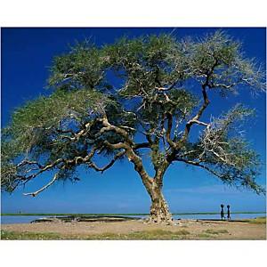 Mali , Philippe BOURSEILLER, affiche 24x30 cm