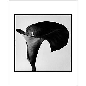 Arum noir II - 1990, Pierre MICHAUD, affiche 24x30 cm