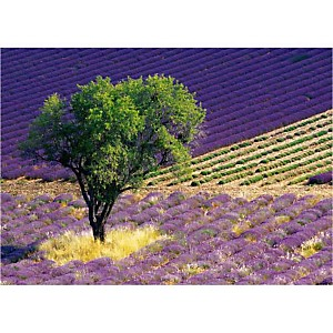 Provence , Alain CHRISTOF, affiche 50x70 cm