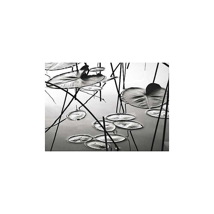 Nénuphars au crépuscule, David GRAY, affiche 50x70 cm