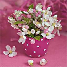Fleurs en rose / Flowers in pink / Rosa ...