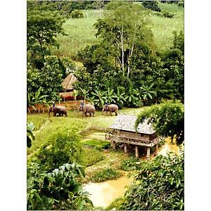 Eléphants dans une ferme, Province de Chiang Raï, Thaïlande, SAMUELSON, affiche 30x40 cm