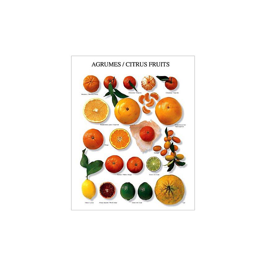 Agrumes, Atelier Nouvelles Images, affiche 40x50 cm