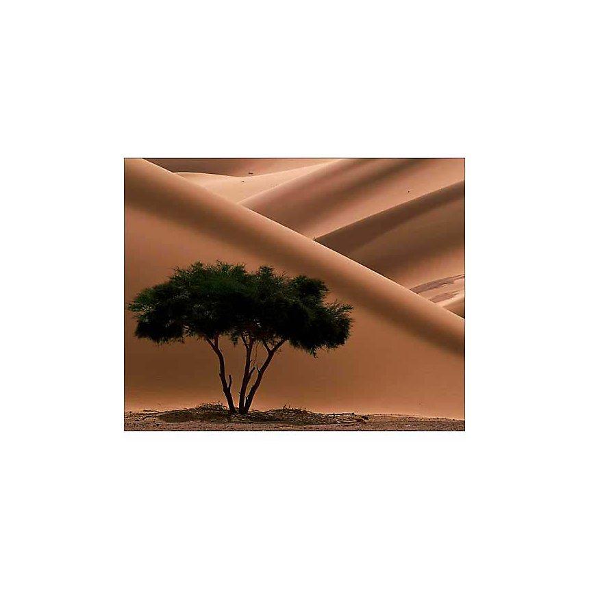 Acacia, Ténéré, Niger, Philippe BOURSEILLER, affiche 24x30 cm
