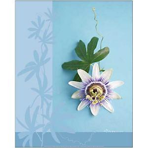 Fleur de la passion, Amélie VUILLON, affiche 40x50 cm