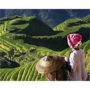 Fille Zhuang surplombant les rizières, Province de Guangxi, Chine, Keren SU, affiche 24x30 cm