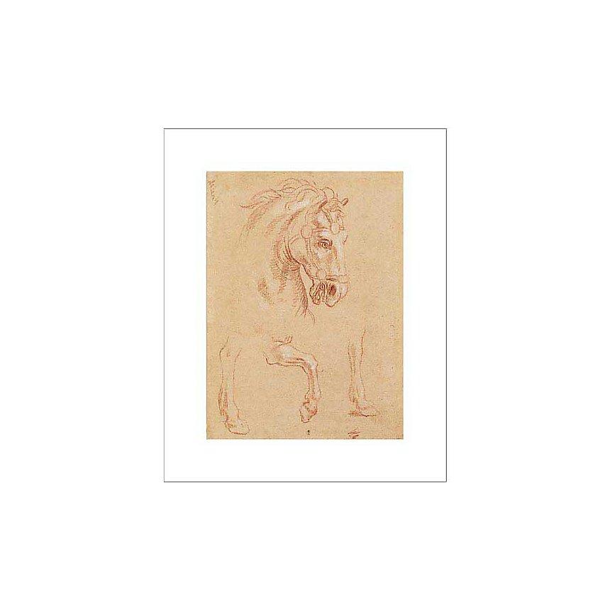 Tête de cheval, Pier-Leone GHEZZI (1674-1755), affiche 40x50 cm
