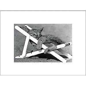 Sieste de chat, David Mc ENERY, affiche 30x40 cm