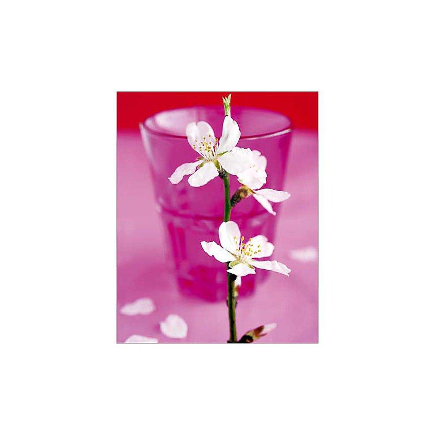 Fleur d'amandier, Amélie VUILLON, affiche 40x50 cm