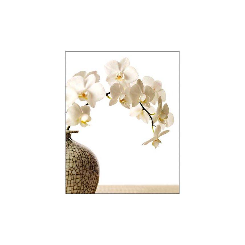 Branche d'orchidée, Stéphane DE BOURGIES, affiche 40x50 cm