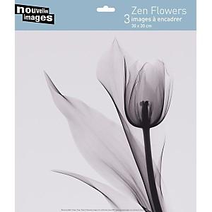 3 Affiches 30 x 30  cm Zen Flowers Marianne HAAS