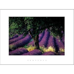 Provence , Gérard SIOEN, affiche 60x80 cm