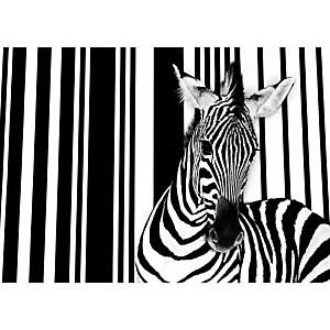 Zebra I , Tim FLACH, affiche 50x70 cm