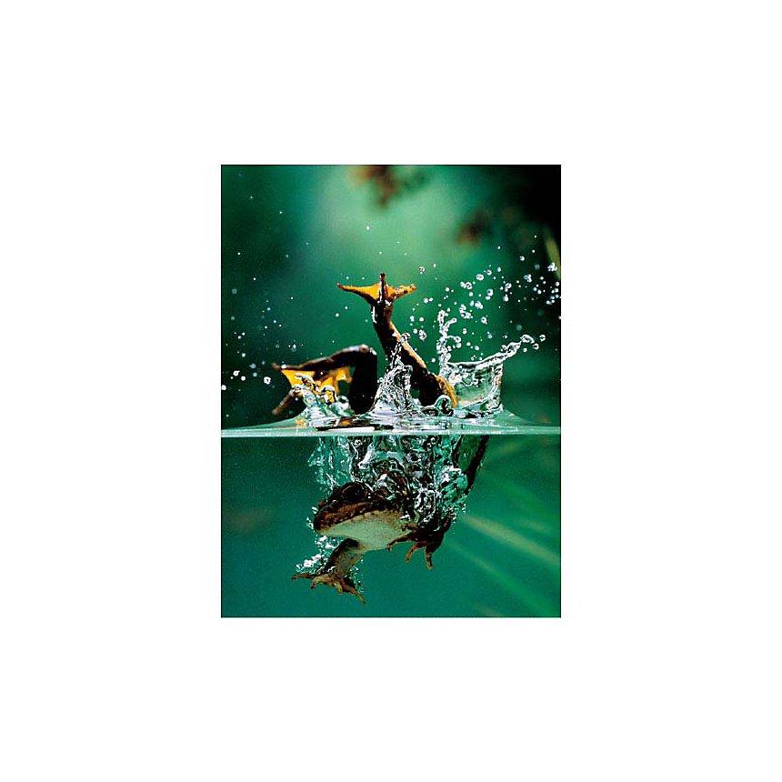 Grenouille sous l'eau, Tim FLACH, affiche 30x40 cm