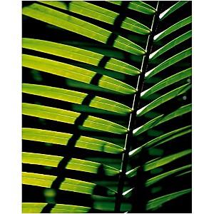 Tropicale , Catherine THUREL, affiche 40x50 cm