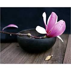 Fleur rose, Amélie VUILLON, affiche 40x5...