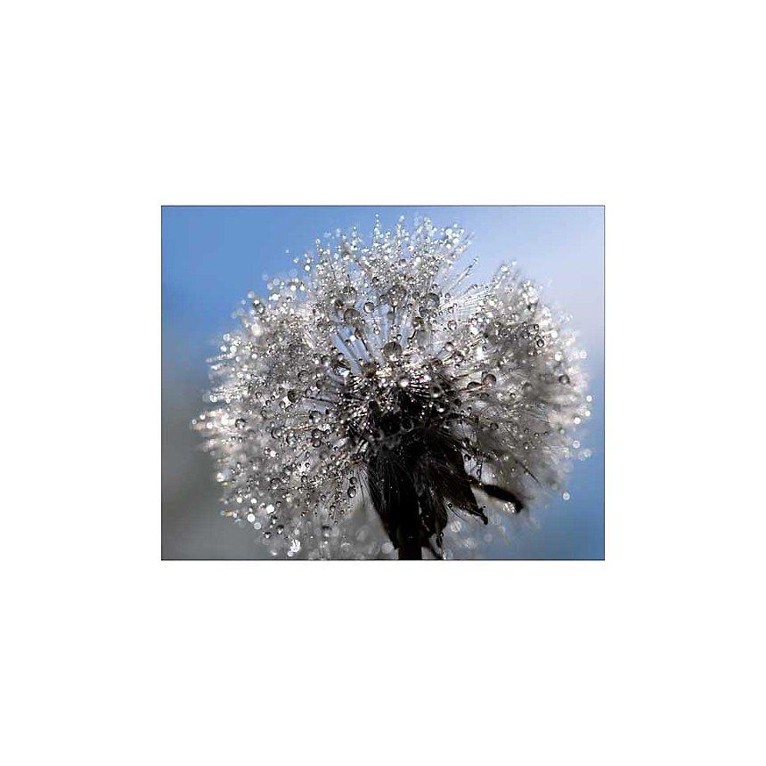 Bouquet cristallin, Mikio WATANABE, affiche 40x50 cm
